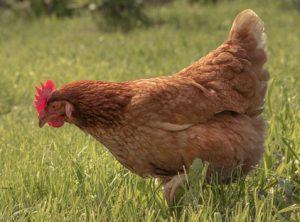 7.Authentic Chicken Marsala